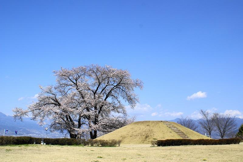 山梨県笛吹市八代町のふるさと公園の桜