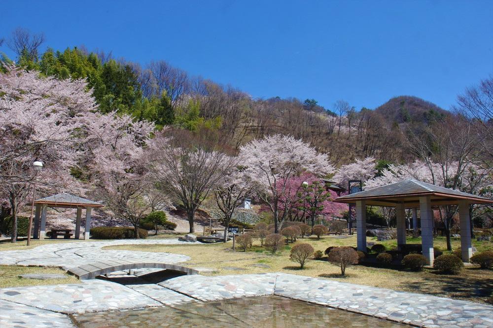 笛吹市御坂路さくら公園の桜